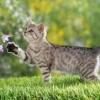 Иксодовые клещи у кошек: чем опасны, как распознать заражение