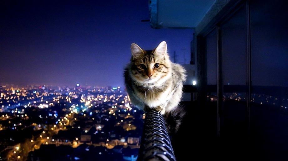 Сонник кошка к чему снится кошка во сне