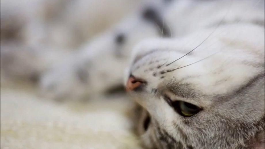 к чему снится кошка во сне женщине