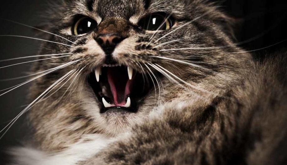 К чему снится кошка во сне женщине: 20 популярных толкований