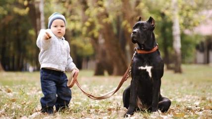 Как научить собаку команде Фас: советы кинолога