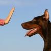 Как научить собаку команде «Фу»: пошаговая инструкция