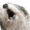 Как научить собаку команде «голос»: советы кинолога