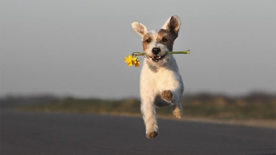 Как научить собаку команде «ко мне». Полное руководство от кинолога