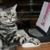 Как объяснить коту, что ему пора работать: одним кормильцем больше