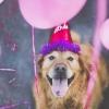 Как узнать, сколько лет собаке: все подробности от кинолога