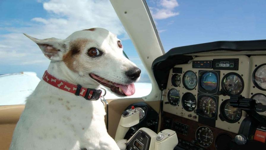 Как перевозить животных в самолёте