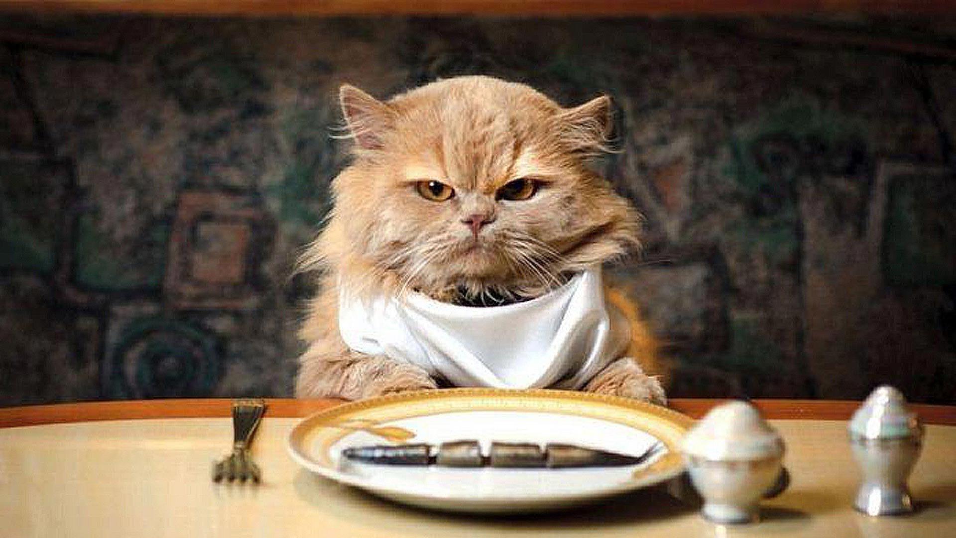 Как отучить кота гадить в неположенном месте: простые способы решения проблемы
