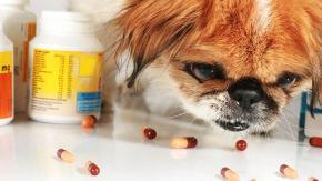 Какая доза изониазида смертельна для собаки при отравлении