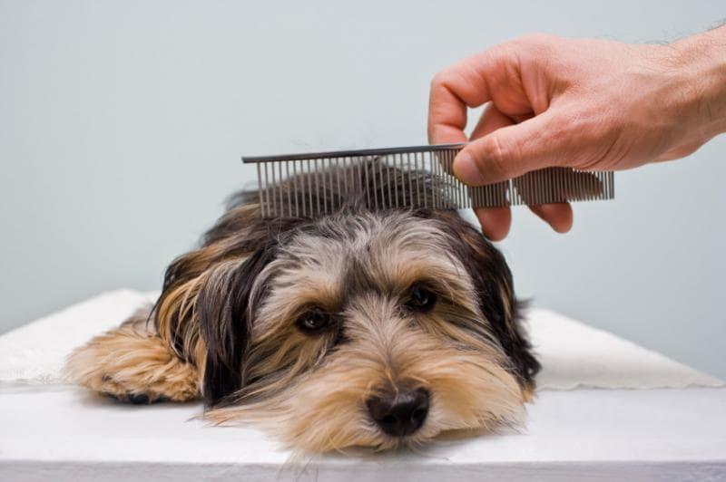 Собачку причесывают