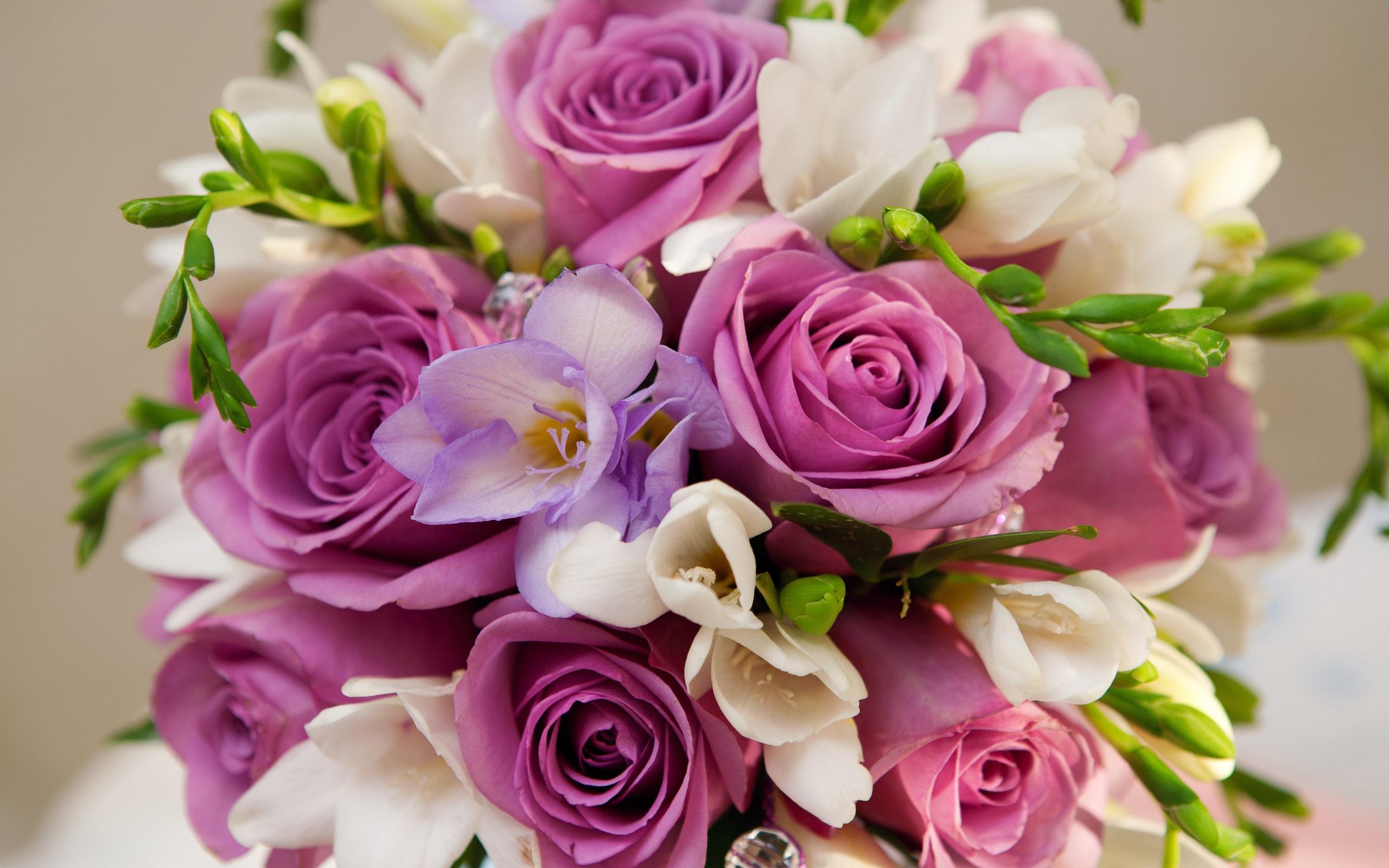 Розы Чайногибридные сорта и фото