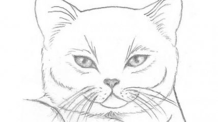 Pictures for Pencil Sketches: Beautiful and Easy Images