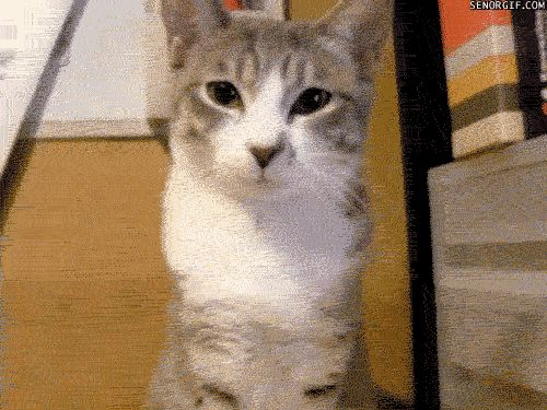 Гифки с котиками. 108 прикольных, милых GIF анимаций
