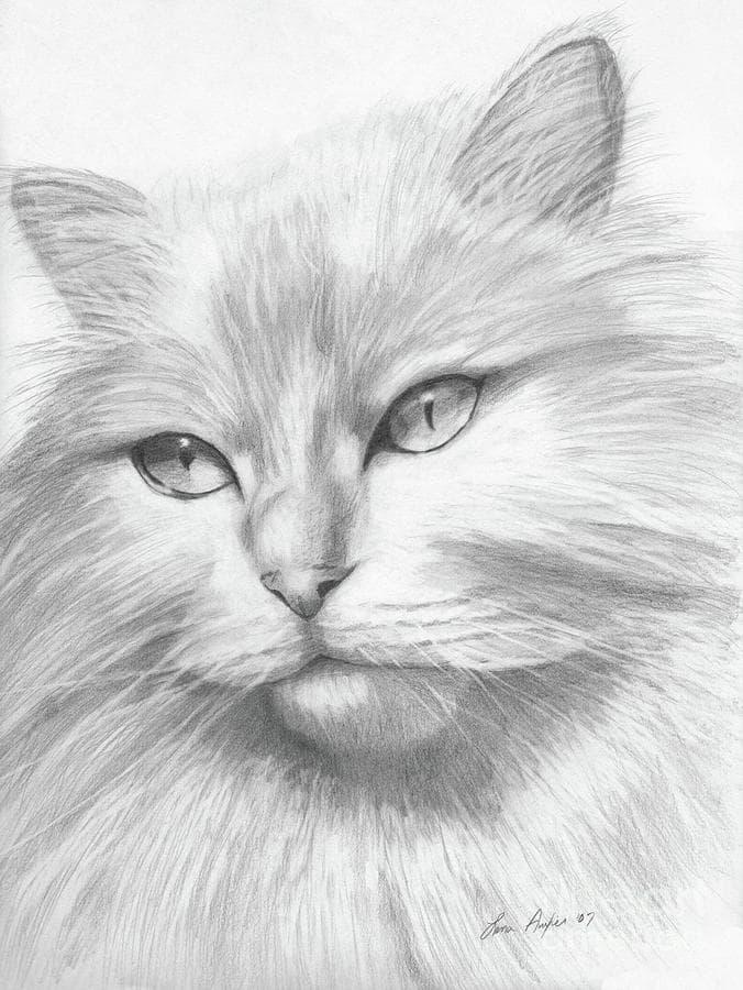 Картинки кошки карандашом для срисовки