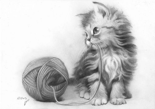 Pictures of Cute Cats for Sketching. About 110 images
