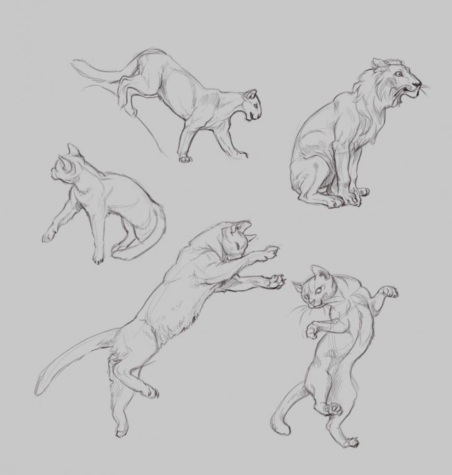 результат картинки рисунки в движении животные набросок идет ежедневно течении