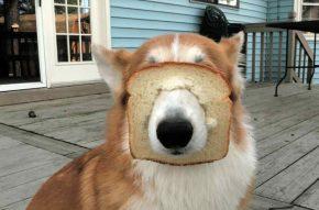 Можно ли собакам хлеб