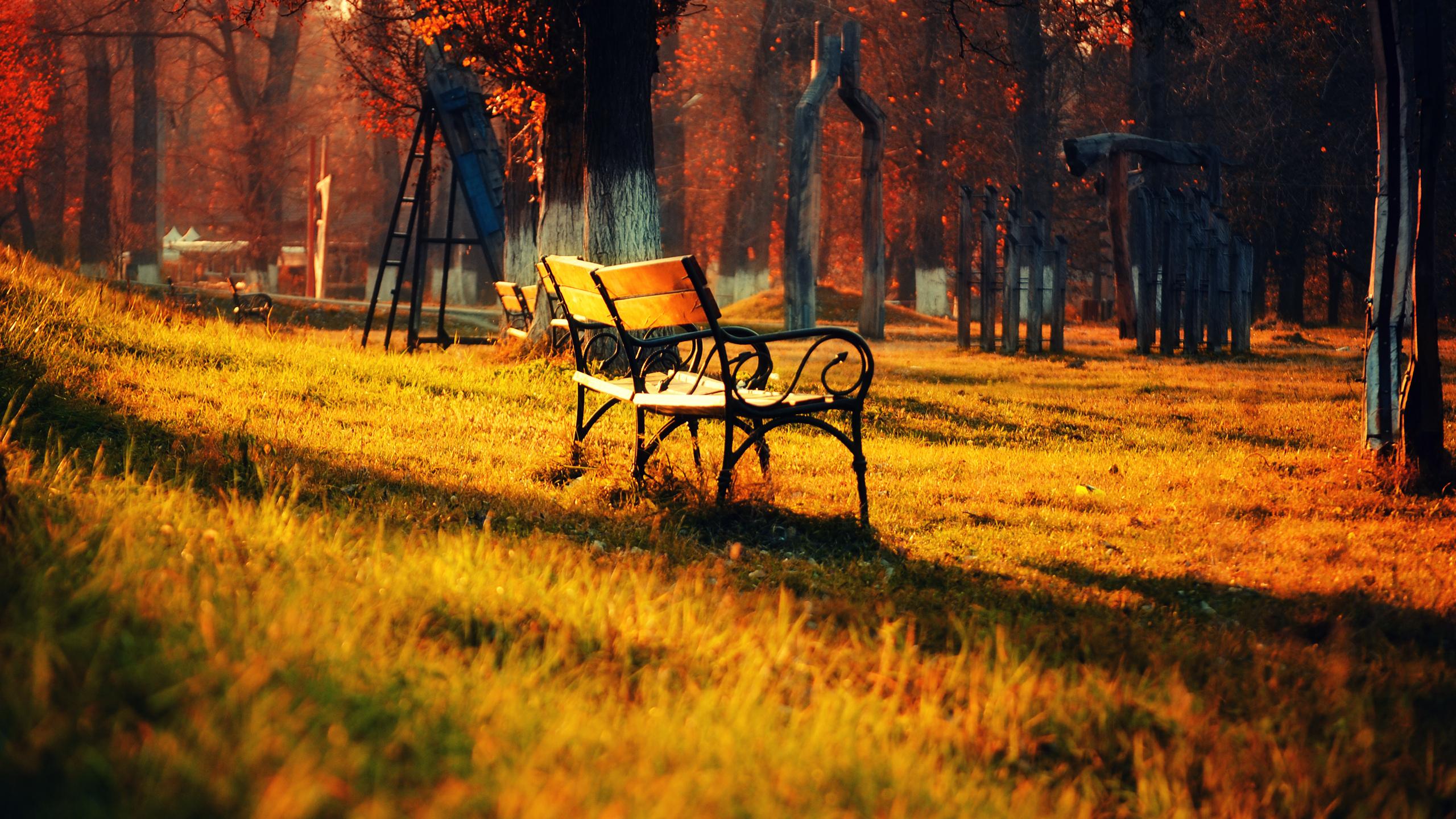 природа деревья осень скамейка листья nature trees autumn bench leaves загрузить