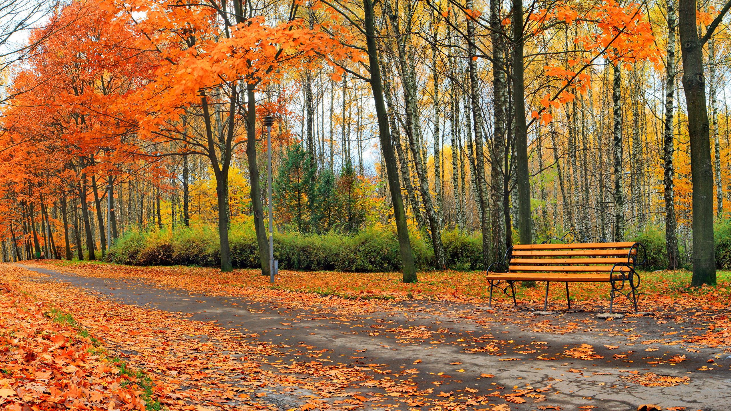 День, лучшие картинки на рабочий стол широкоформатные осень наступила