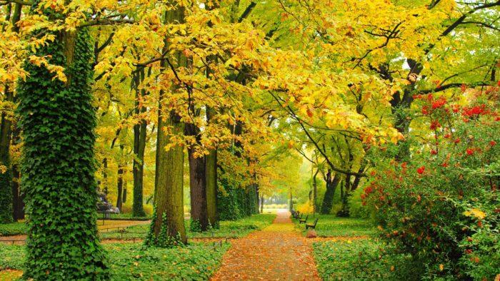 Осень: красивые и большие обои на рабочий стол. Скачайте здесь!