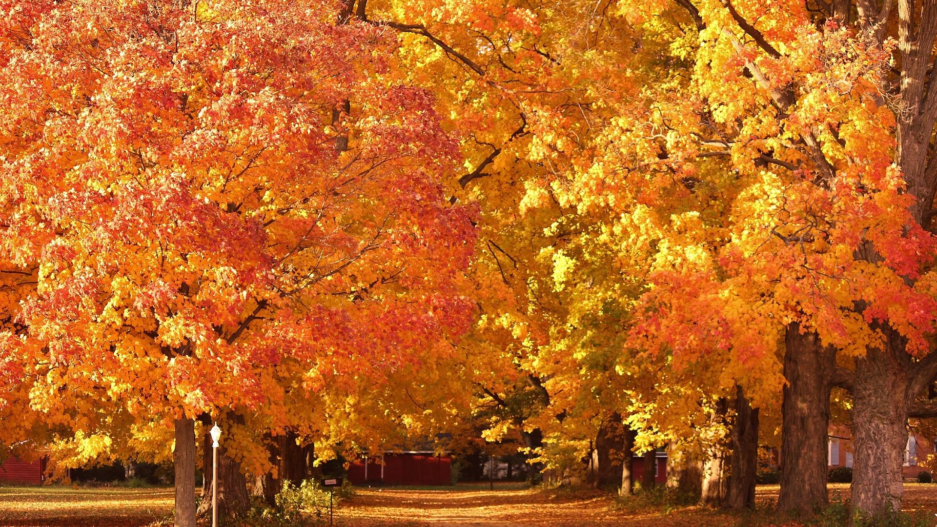 Уходящая осень  Осень GIF картинки  поздравительные открытки
