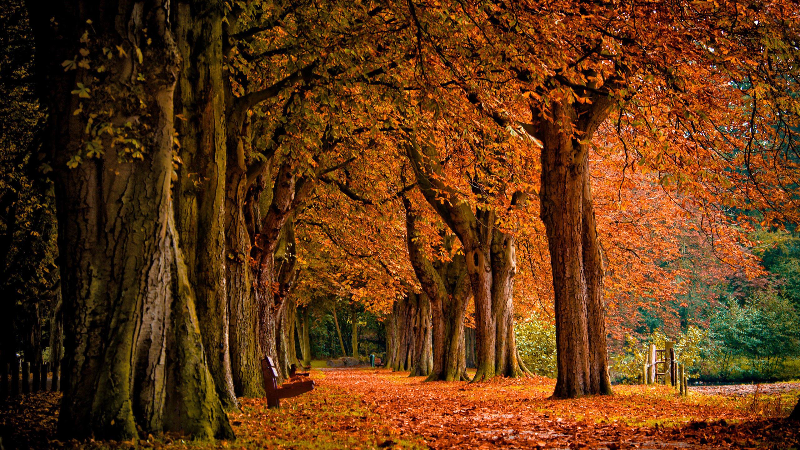 природа лист осень деревья без смс