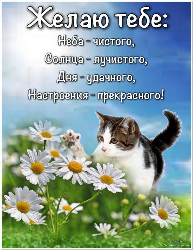 """Картинка """"Хорошего дня и отличного настроения"""" с котом на лужайке"""