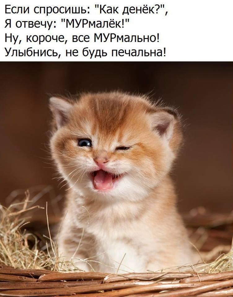 """Картинка """"Хорошего дня и отличного настроения"""" с котёнком и стихом"""