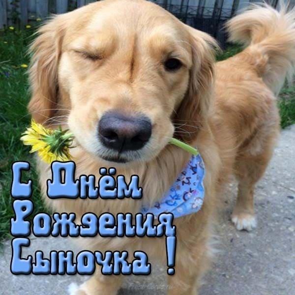 Изображение - Поздравление с рождением сына для мамы открытки pozdravlayu-s-dnem-rozhdeniya-sina-39
