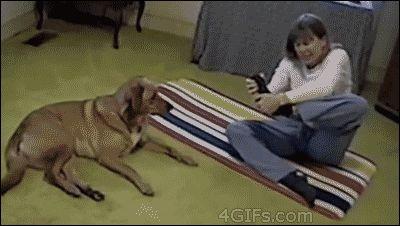 Пёс занимается йогой с хозяйкой