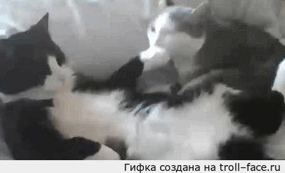 коту лижет лапу кошка