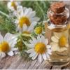 Лечебные свойства аптечной ромашки и противопоказания к использованию