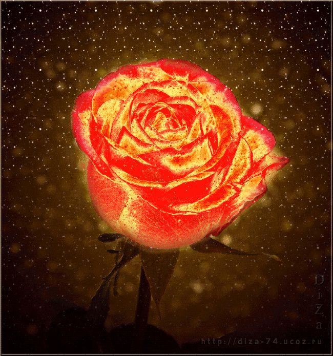 Открытке день, гиф картинки розы
