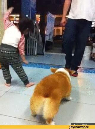 Ржачная гифка пес танцует