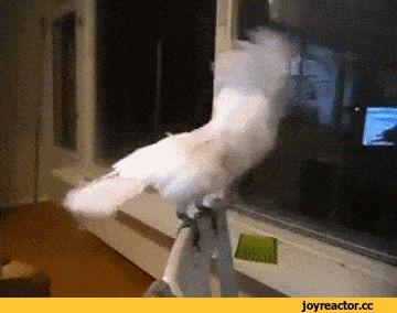 Ржачная гифка попугай