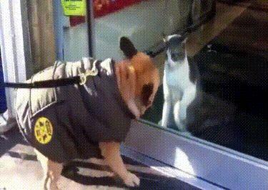 Ржачная гифка кот против пса