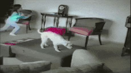 Ржачная гифка оборот собаки