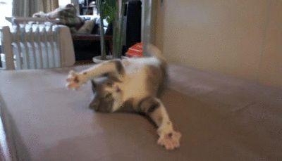 Ржачная гифка с играющим котом