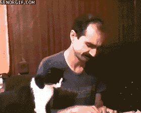 Ржачная гифка кот отбирает еду