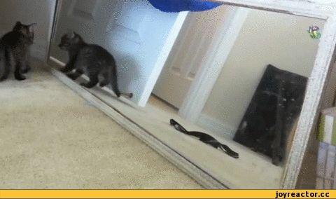 Ржачная гифка котенок и зеркало