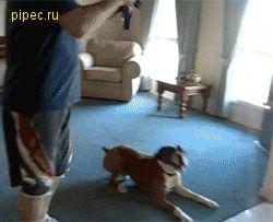 Ржачная гифка с прыгающим псом