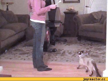 Ржачная гифка кот прыгает за бумажкой