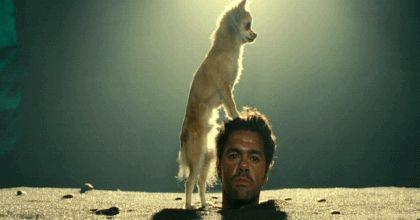 Ржачная гифка собака и голова мужчины