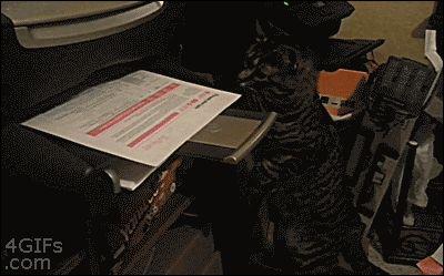 Кот распечатал документ ржачная гифка