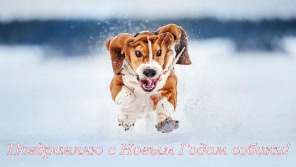 Картинки с Новым Годом 2018: Год собаки