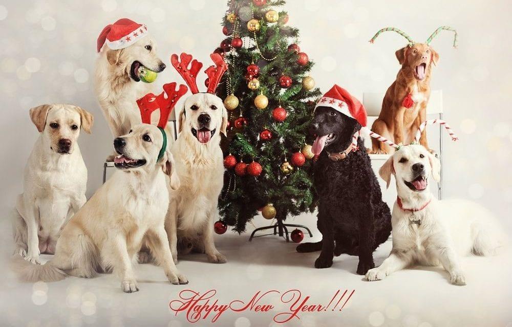 Подарок, открытки с новым годом собака
