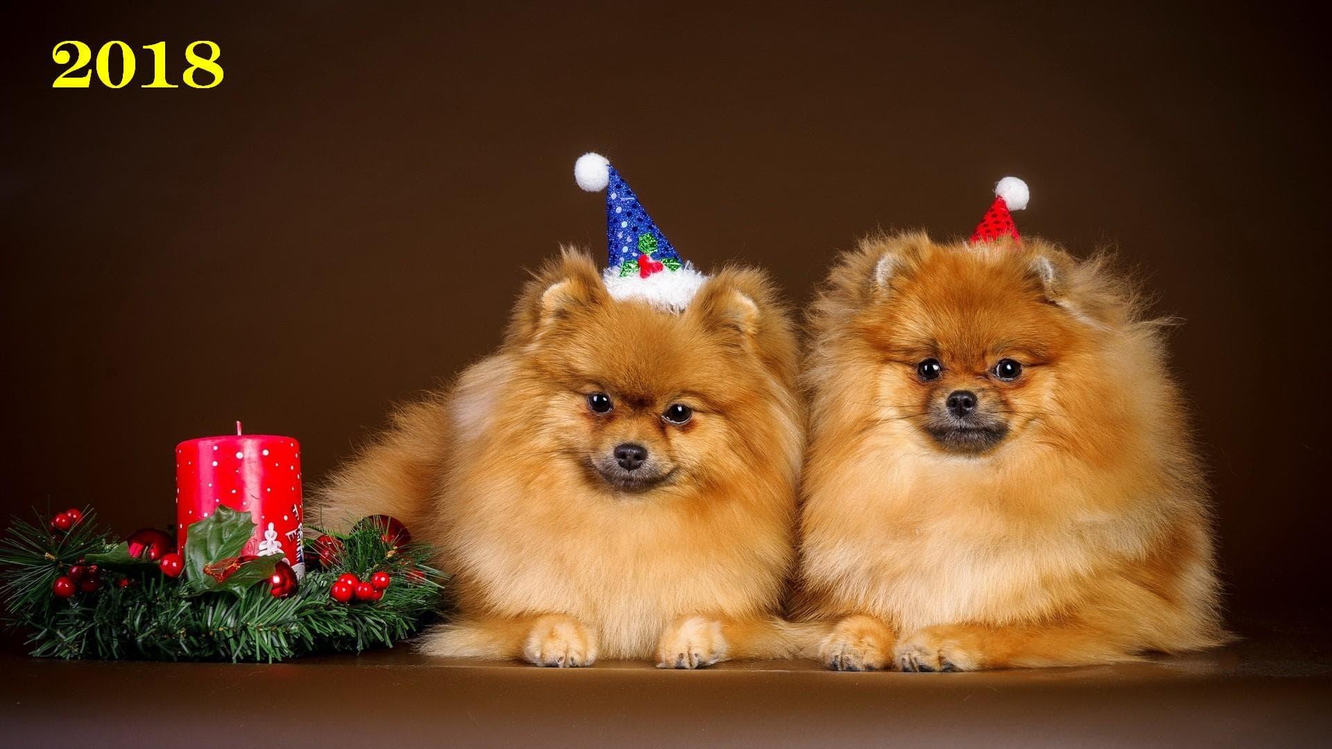 Прикольные Новогодние картинки 2018 в год собаки