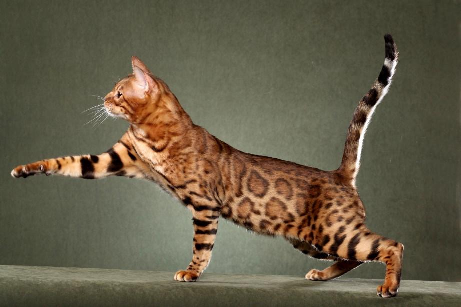 зависимости самые дорогие животные в мире фото сделать картинку