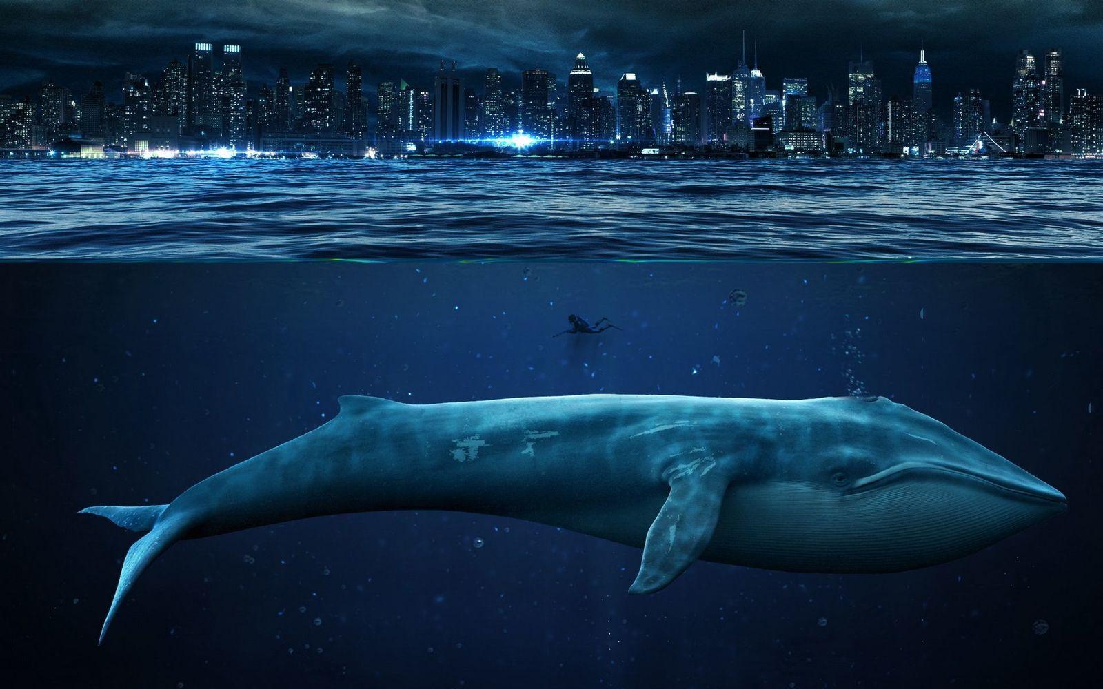 Картинки самых красивых китов