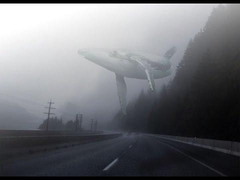 Синий кит как дирижабль